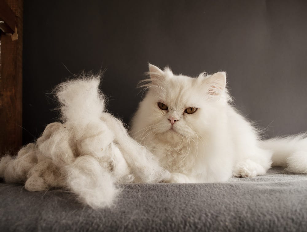 How to get cat fur off couch